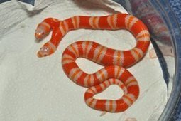 X-ray of two-headed snake | OK, that's just weird! | Scoop.it