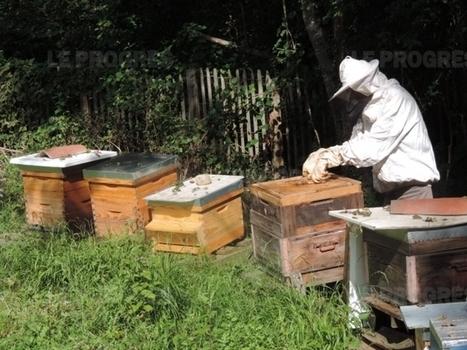 Apiculture : un nouveau dispositif de surveillance des ruchers | apiculture 2.0 | Scoop.it