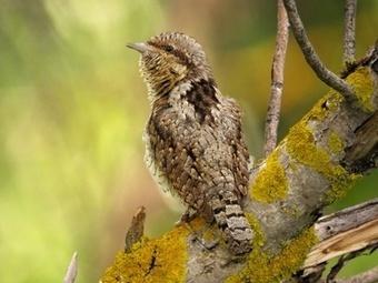 ¿Es terapéutico el canto de los pájaros? | Agua | Scoop.it