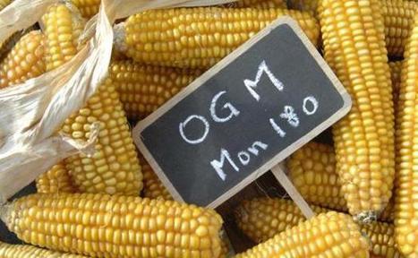 Etats-Unis: Le Connecticut va étiqueter les OGM | Des 4 coins du monde | Scoop.it