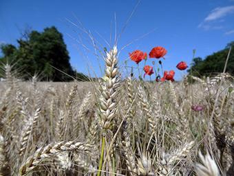 Agroécologie : vers une autre agriculture - notre-planete.info | alternatives agricoles | Scoop.it