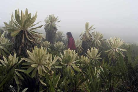 Cine en Colombia: crece en la impopularidad | el cine en colombia | Scoop.it