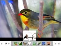 Photo flash maker, créer des carrousels et des diaporamas | Outils en ligne pour bibliothécaires | Scoop.it