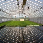 The Magic Of Aquaponics — The Pop-Up City | Vertical Farm - Food Factory | Scoop.it