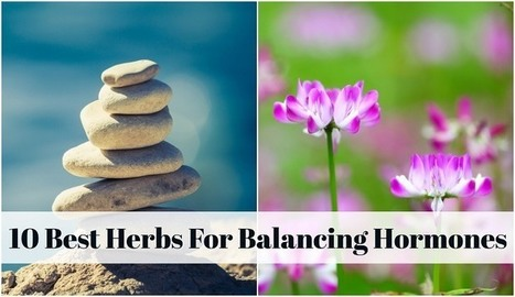 10 Best Herbs For Balancing Hormones | PCOS or Polycystic Ovarian Syndrome Awareness | Scoop.it