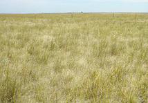 Using Fire to Keep Rangelands Viable for Grazing | Rangeland Scoops | Scoop.it