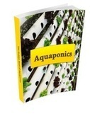 The best elven fish species for you aquaponics | Aquaponics Systems | Aquaponics World View | Scoop.it