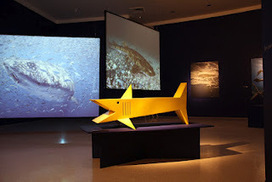 The Steel Whisperer: SHARK Exhibit at Fort Lauderdale Museum of Art | Wilton Manors | Scoop.it