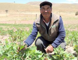 Nicolas, agriculteur biologique de quinoa au Pérou   Questions de développement ...   Scoop.it