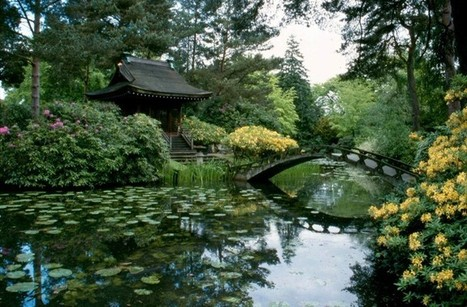 Amazed by Science 2015 - Japanese Garden Tours - Guided Walk in Knutsford, Knutsford - Discover Cheshire | Japanese Gardens | Scoop.it
