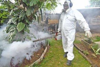 L'épidémie de dengue déclarée en Nouvelle-Calédonie | EntomoNews | Scoop.it