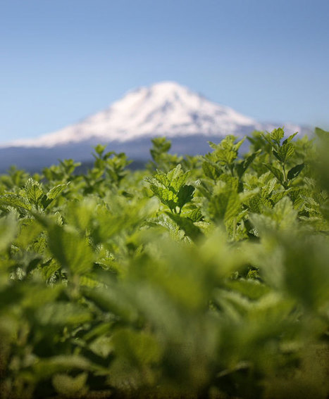 Farm Stories: Calming Herbs « The Mountain Rose Blog | Onward and Upward | Scoop.it