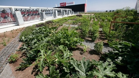 Levi's Stadium, home of 49ers, unveils rooftop farm | The EcoPlum Daily | Scoop.it