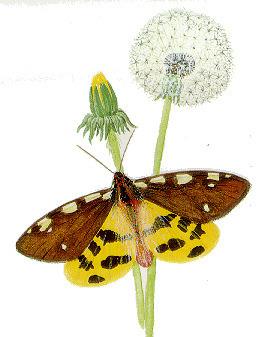 OPIE-Insectes. La Galerie : portraits d'insectes | Insect Archive | Scoop.it