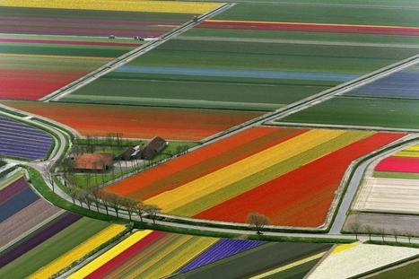 Netherlands' Technicolor Tulip Fields | Harmony Nature | Scoop.it