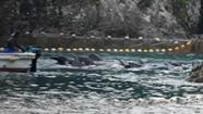 I-Team investigates Japanese whale and dolphin slaughter | Oceans and Wildlife | Scoop.it