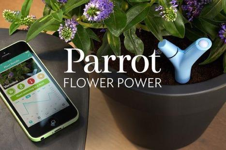 Concours | Ayez la main verte grâce au Parrot Flower Power ! | décoration & déco | Scoop.it