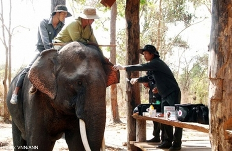 Vietnam's elephants on brink of extinction - AsiaOne | GarryRogers NatCon News | Scoop.it