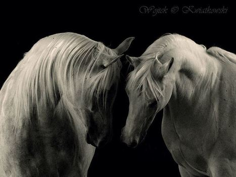 Heart horses   Equine Photography   Scoop.it