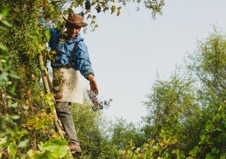 Chile's roots rediscovered | Vitabella Wine Daily Gossip | Scoop.it