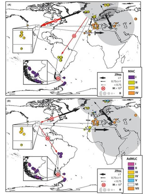 Pleistocene expansion of the bipolar lichen Cetraria aculeata into the Southern hemisphere | Lichen systematics | Scoop.it