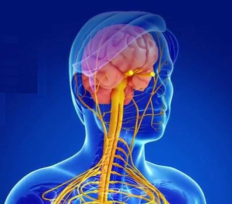 Multiple Sclerosis Drugs Market - Global Industry Analysis, Size, Share, Growth, Trends and Forecast 2012 - 2018   alina martin   Scoop.it