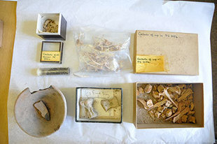 Artifacts from Ur Discovered in Bristol - Archaeology Magazine | Ancient History and Archaeology | Scoop.it