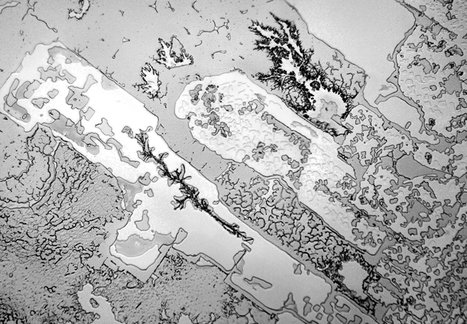 The Microscopic Structures of Dried Human Tears | Transcalar Imaginary | Scoop.it