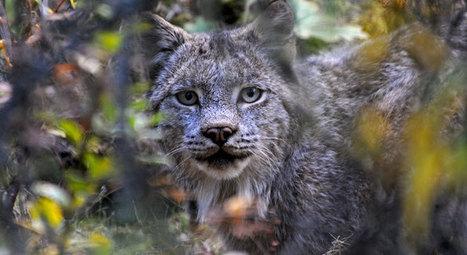 Forest Planning for Wildlife Habitat | GarryRogers Biosphere News | Scoop.it