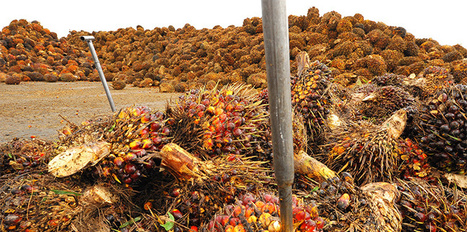 PLANET PALM OIL: The Bait and Switch of Palm Oil Giants | Biodiversit