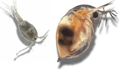 Hard Water Panfishing – Small Baits, Big Rewards - AnglingAuthority.com   Fishing - How To   Scoop.it
