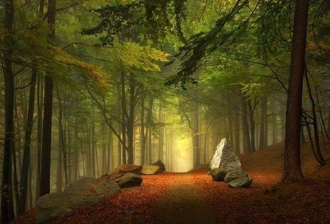 Enchanted-Forest-Bavaria-Germany-620x422.jpg (620x422 pixels) | Awesome Photography | Scoop.it