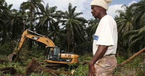 Agro-Industrie : Socfin, une épine dans le pied de Vincent Bolloré | Questions de développement ... | Scoop.it