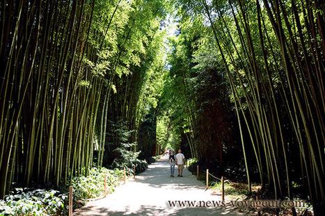 La bambouseraie de Prafance   Utiliser le patrimoine local cévenol pour enseigner   Scoop.it