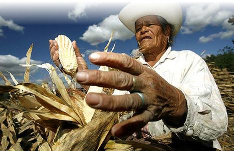 Fueron detenidos 11 campesinos en el Valle del Cauca | La Rebelión De La Memoria | Scoop.it