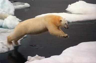 La pression pétrolière s'accroit sur l'Arctique, fragilisé par le ... | la planète en danger | Scoop.it