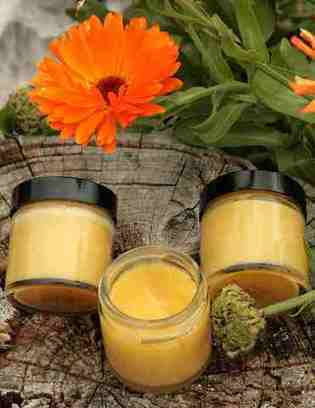 How To Make Calendula Salve | Permaculture University | Scoop.it