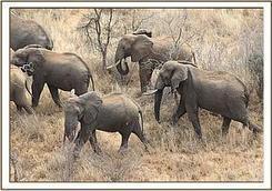 The David Sheldrick Wildlife Trust Updates | GarryRogers NatCon News | Scoop.it