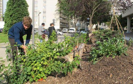 En plantant 10 000 arbres, la Haie magique remet du vert en Essonne | Paris durable | Scoop.it