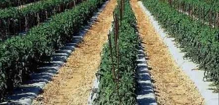 FranceAgriMer fixe les objectifs de la filière agroalimentaire à l'horizon 2025 | agro-media.fr | Actualité de l'Industrie Agroalimentaire | agro-media.fr | Scoop.it