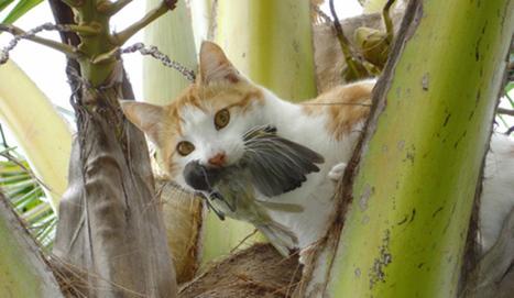 Los gatos asilvestrados, el azote de las especies amenazadas en las islas | La célula | Scoop.it