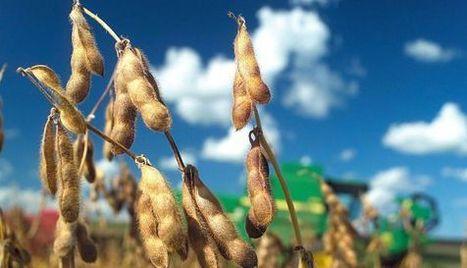Monsanto gana en el Supremo de EE UU su litigio por la violación de una patente | Ciencia, política y Derecho | Scoop.it