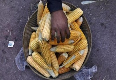 US corn ethanol cost poor nations $6.6 bln - study - AlertNet | People and Development | Scoop.it