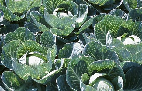 It's Not Too Late for a Vegetable Garden | School Gardening Resources | Scoop.it