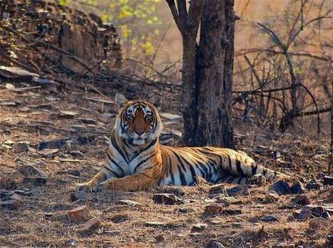 Drones to monitor wildlife in 10 Indian sites - The Times of India | #WildlifeWatch | Scoop.it
