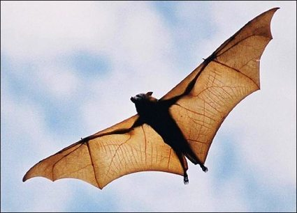 Exploring These Extraordinary: The Biology of Bats – lymeline