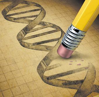 Molecular biology: Genetic touch-ups : Nature : Nature Publishing Group | Bioinformatics | Scoop.it