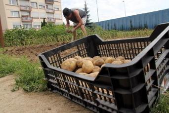 Bricoler, jardiner, bouger c'est bon pour le cœur - Le Républicain Lorrain | Sante active | Scoop.it