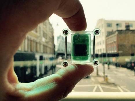 Will these wearables finally make us cyborgs?   Ubiquitous Learning   Scoop.it