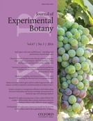 Characterization of major ripening events during softening in grape: turgor, sugar accumulation, abscisic acid metabolism, colour development, and their relationship with growth | Plant Gene Seeker -PGS | Scoop.it